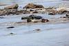 Nile_Crocodile_Mara_Reserve_Asilia__0028