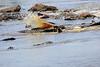 Nile_Crocodile_Mara_Reserve_Asilia__0023