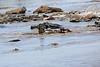 Nile_Crocodile_Mara_Reserve_Asilia__0029