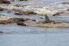 Nile_Crocodile_Mara_Reserve_Asilia__0074