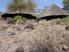 Tortilis_Amboseli__0015