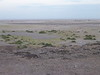 Tortilis_Amboseli__0023