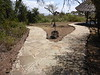 Tortilis_Amboseli__0021