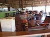 Tortilis_Amboseli__0017
