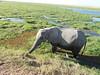 Tortilis_Camp_Amboseli_Elewana__0018