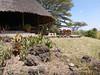 Tortilis_Amboseli__0018