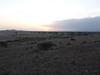 Tortilis_Amboseli__0024