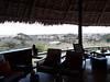 Tortilis_Amboseli__0003