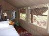 Tortilis_Amboseli__0012