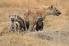 Spotted_Hyena_Mara_North_Elewana__0008