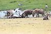 Spotted_Hyena_Amboseli_Elewana__0013