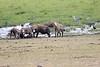 Spotted_Hyena_Amboseli_Elewana__0008
