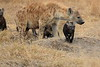 Spotted_Hyena_Mara_North_Elewana__0012