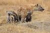 Spotted_Hyena_Mara_North_Elewana__0008