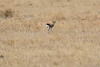Thompsons_Gazella_Mara_North_Elewana__0021