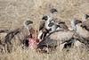Vultures_Mara_Reserve_Asilia__0045