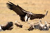 Vultures_Mara_Reserve_Asilia__0068