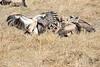 Vultures_Mara_Reserve_Asilia__0030