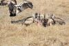 Vultures_Mara_Reserve_Asilia__0028