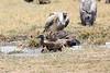 Vultures_Mara_Reserve_Asilia__0056