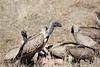 Vultures_Mara_Reserve_Asilia__0051