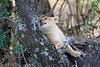 Lion_Cubs_Mara_North_Elewana__0137