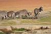 Zebra_Amboseli_Elewana__0010