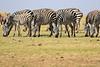 Zebra_Amboseli_Elewana__0018
