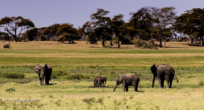 Elephants on the Mara