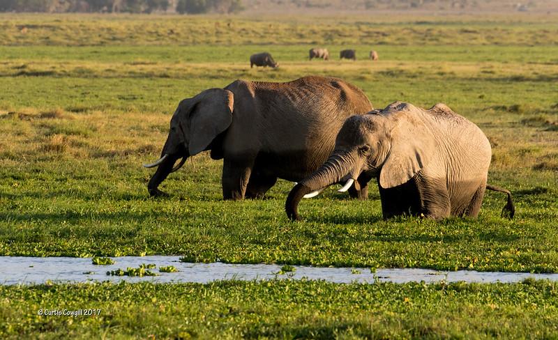 Amboseli Marsh