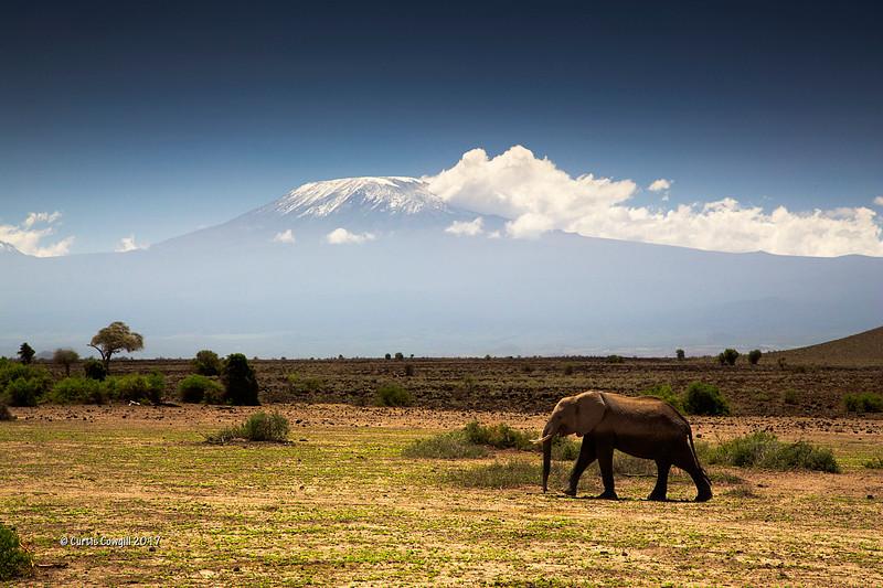 Elephant at Kilimanjaro