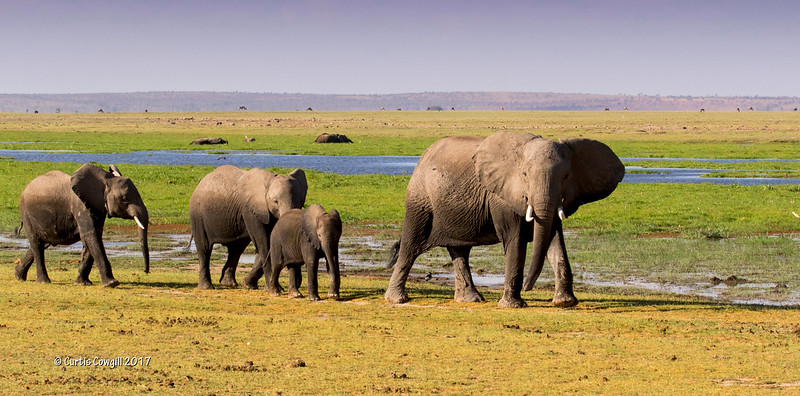 Family outing in Amboseli