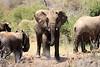 Elephant_Loisaba_2018__0016