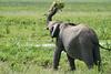 Elephant_Plant_Clothing_Asilia_2018_Mara__0008