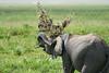 Elephant_Plant_Clothing_Asilia_2018_Mara__0015