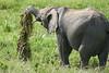 Elephant_Plant_Clothing_Asilia_2018_Mara__0020