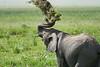 Elephant_Plant_Clothing_Asilia_2018_Mara__0025