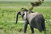 Elephant_Plant_Clothing_Asilia_2018_Mara__0012
