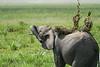 Elephant_Plant_Clothing_Asilia_2018_Mara__0029