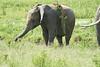 Elephant_Plant_Clothing_Asilia_2018_Mara__0042