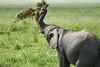 Elephant_Plant_Clothing_Asilia_2018_Mara__0023