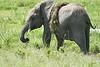Elephant_Plant_Clothing_Asilia_2018_Mara__0033