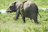 Elephant_Plant_Clothing_Asilia_2018_Mara__0041