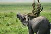 Elephant_Plant_Clothing_Asilia_2018_Mara__0028