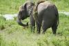 Elephant_Plant_Clothing_Asilia_2018_Mara__0039