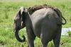 Elephant_Plant_Clothing_Asilia_2018_Mara__0030
