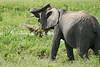 Elephant_Plant_Clothing_Asilia_2018_Mara__0005