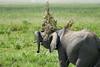Elephant_Plant_Clothing_Asilia_2018_Mara__0016