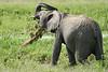 Elephant_Plant_Clothing_Asilia_2018_Mara__0003