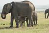 Elephant_Asilia_2018_Mara__0179